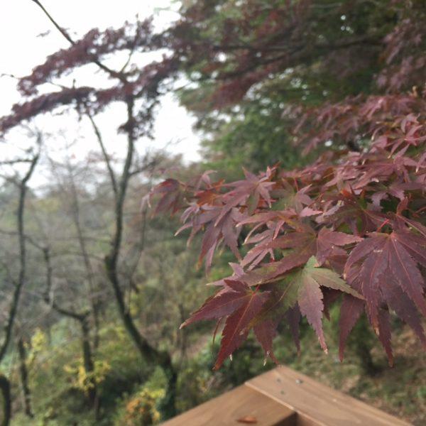 もうすっかり秋ですサムネイル