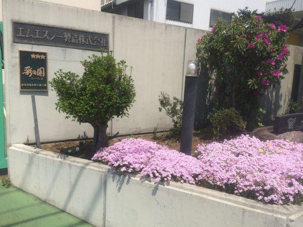 芝桜が綺麗です(*^_^*)サムネイル